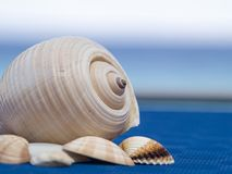 Shell Royalty Free Stock Photos