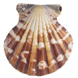 Shell. Of the sea bed(seabed Stock Images