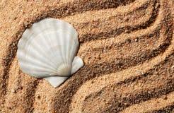 Shell. Of the family Pectinidae Stock Photo
