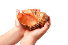 Shell. In the hands of a child Stock Photography