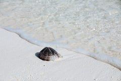 Shell image libre de droits