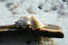 Shell royalty-vrije stock fotografie