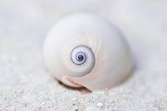 Shell Fotos de archivo
