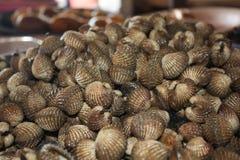 Shell imagens de stock
