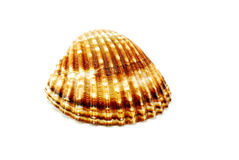 Shell Stock Photos