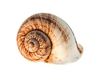 Shell. A snail shell Isolated over a white background Royalty Free Stock Image