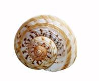 Shell Stock Afbeeldingen