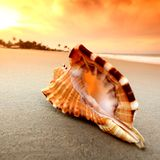 Shell. On sand under sunset sky Stock Images