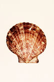 Shell. On sand paper Royalty Free Stock Image
