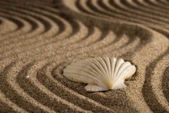 Shell. S between the sandy beaches Stock Image