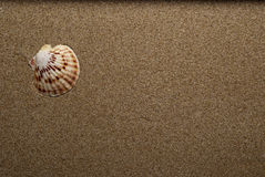 Shell. S between the sandy beaches Royalty Free Stock Photo