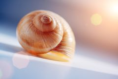 Shell. Escargot shell in rays of sunshine Royalty Free Stock Image