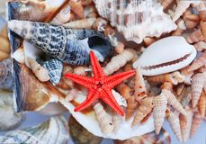 Shell. Group of shell and star royalty free stock images