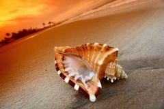 Shell lizenzfreie stockbilder