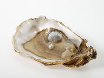 Shell. Oyster and pearl culture on white background Stock Image