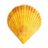 Shell Royalty Free Stock Photo