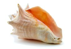 Shell. On the white background stock photos