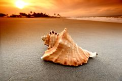 Shell. On sand under sunset sky Royalty Free Stock Photos
