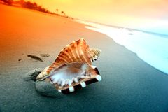 Shell. On sand under sunset sky Royalty Free Stock Photography
