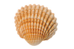 Shell. On a white background Royalty Free Stock Images
