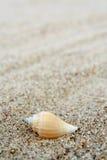 Shell Royalty-vrije Stock Foto's
