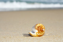 Shell Royalty Free Stock Images