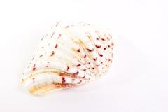 Shell Arkivfoton