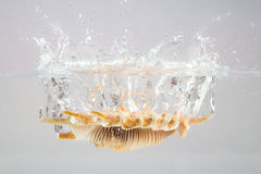 Shell. Sea shell in water splash Royalty Free Stock Photos