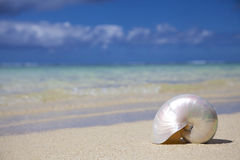 Shell Fotografia Stock