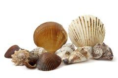 Shell 3 Stock Photo