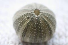 Shell 3 del mar Imagen de archivo
