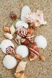 Shell Foto de Stock Royalty Free