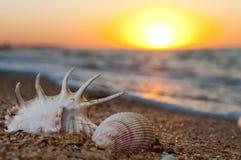 Shell Fotografia Stock Libera da Diritti
