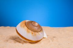 Shell. Sea shell in the sand stock photo