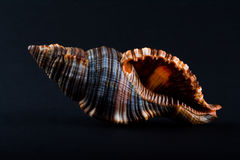 Shell Royaltyfria Foton