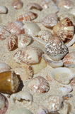 Shell 10 Arkivbilder