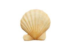 Shell. Macro of Sea Shell isolated over white Stock Photo