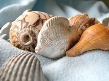 Shell. A view of variety shell Stock Photography