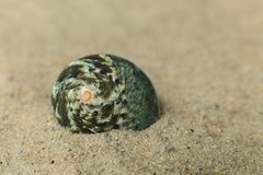 Shell Imagenes de archivo