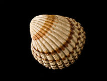 Shell Stock Foto