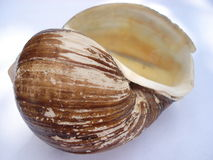Shell (2) photo stock