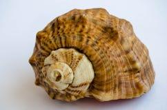 Shell fotos de stock royalty free