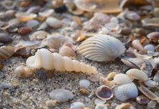 Shell Foto de Stock Royalty Free