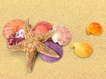 Shell Fotografía de archivo libre de regalías