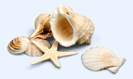 Shell image stock