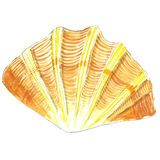 Shell Στοκ Εικόνες