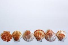 Shell Lizenzfreie Stockfotos