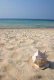 Shell. Big shell on the sand stock photo