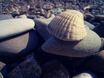 Shell Zdjęcia Stock