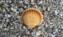 Shell Lizenzfreies Stockbild